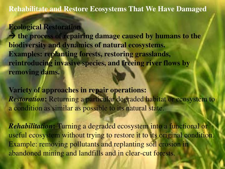 Rehabilitate and Restore Ecosystems That We Have Damaged