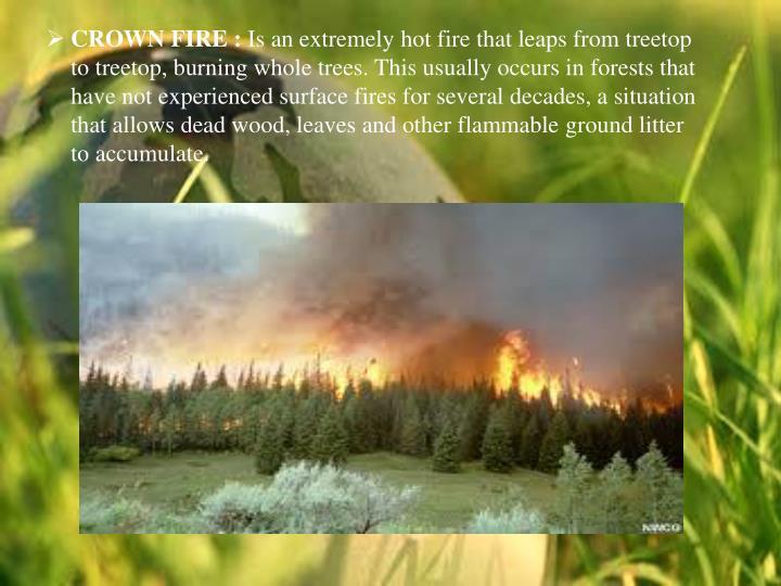 CROWN FIRE :