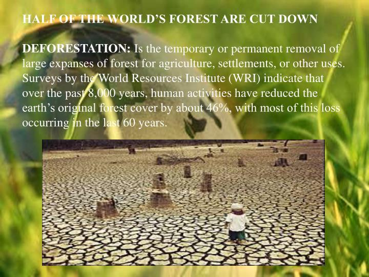 HALF OF THE WORLD'S FOREST ARE CUT DOWN
