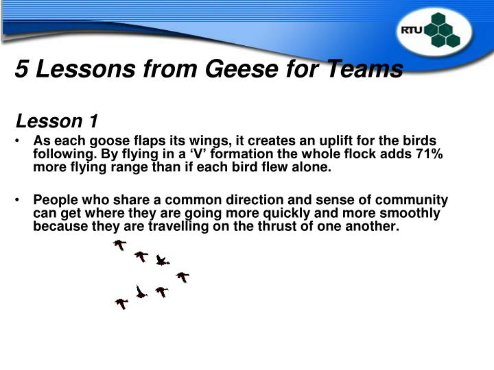 5 Lessons from Geese for Teams