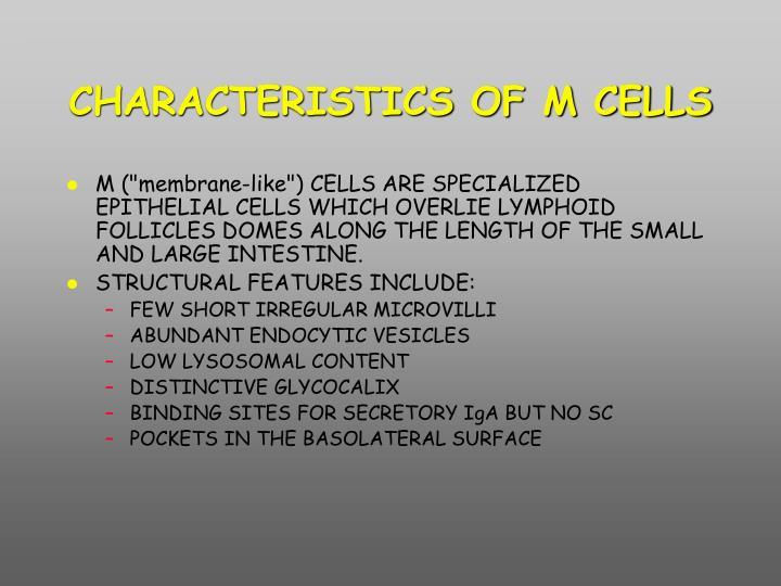 CHARACTERISTICS OF M CELLS
