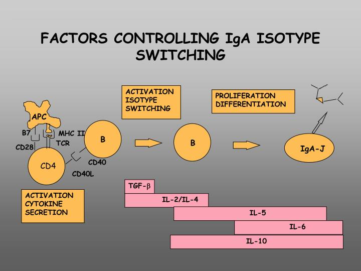 FACTORS CONTROLLING IgA ISOTYPE SWITCHING