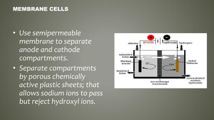 Membrane Cells