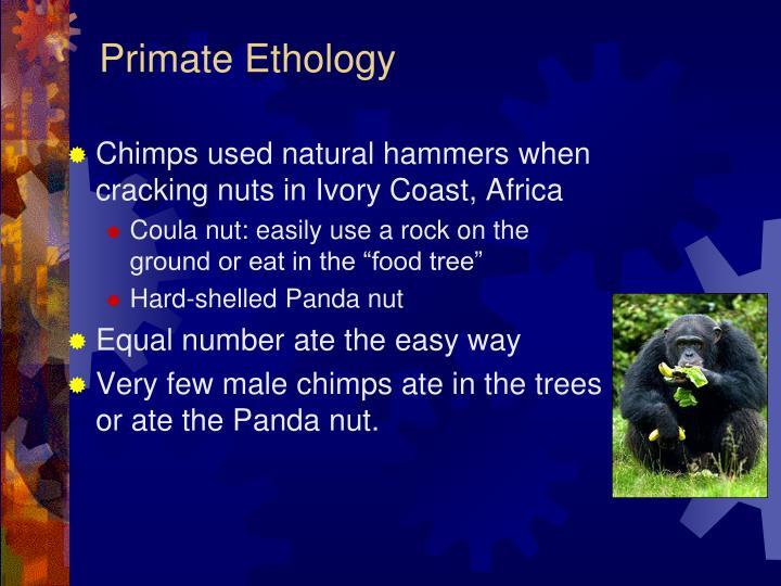 Primate Ethology