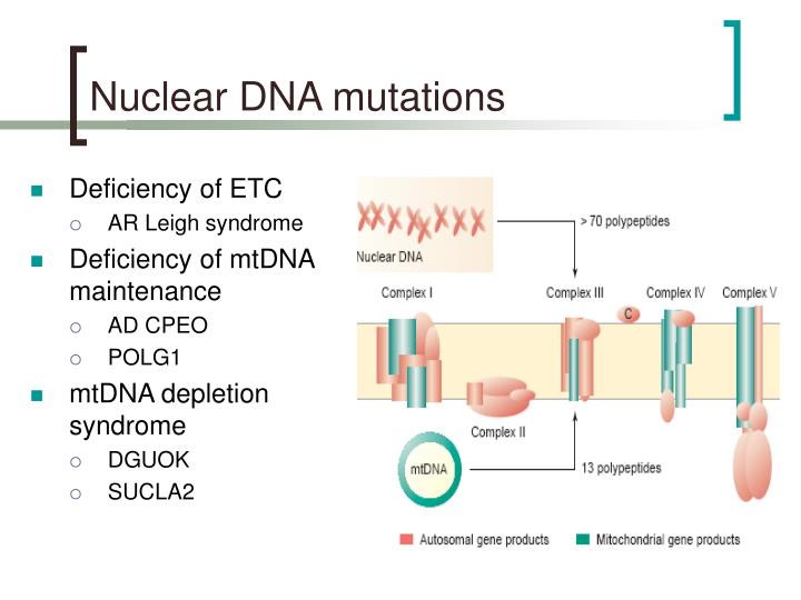 Nuclear DNA mutations