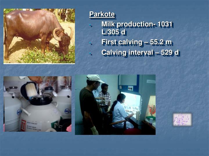 Parkote