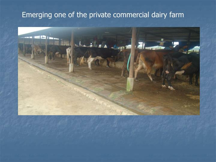 Emerging one of the private commercial dairy farm