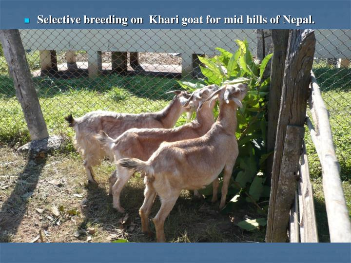 Selective breeding on