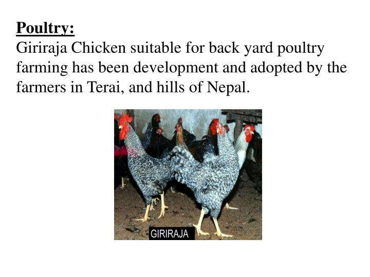 Poultry: