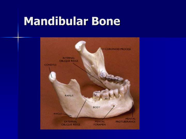 Mandibular Bone