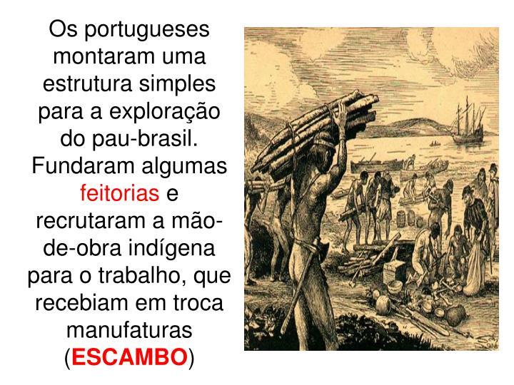 Os portugueses montaram uma estrutura simples para a exploração do pau-brasil. Fundaram algumas