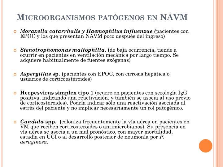 Microorganismos patógenos en NAVM