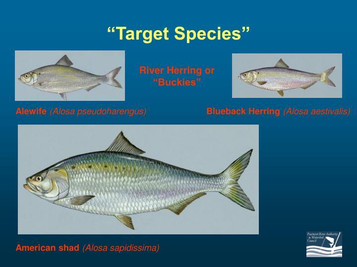 """""""Target Species"""""""