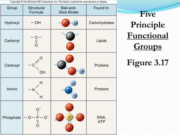 Five Principle