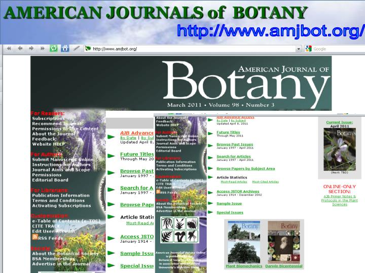 AMERICAN JOURNALS of  BOTANY
