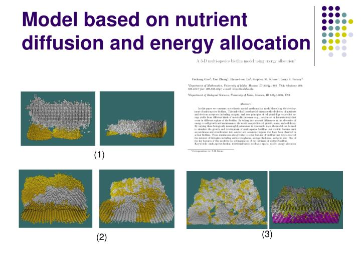 Model based on nutrient diffusion and energy allocation