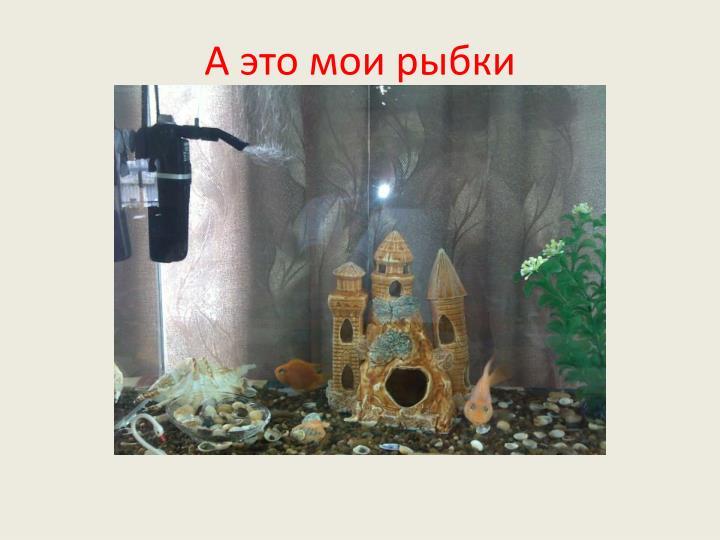 А это мои рыбки