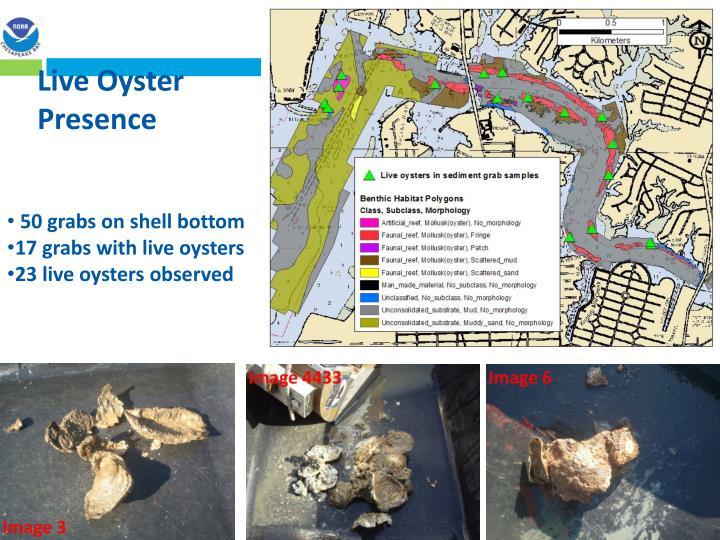 Live Oyster Presence
