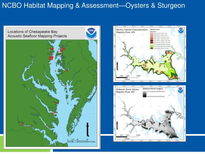 NCBO Habitat Mapping & Assessment—Oysters & Sturgeon