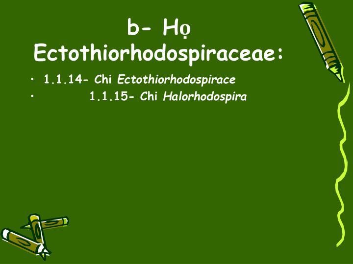 b- Họ Ectothiorhodospiraceae:
