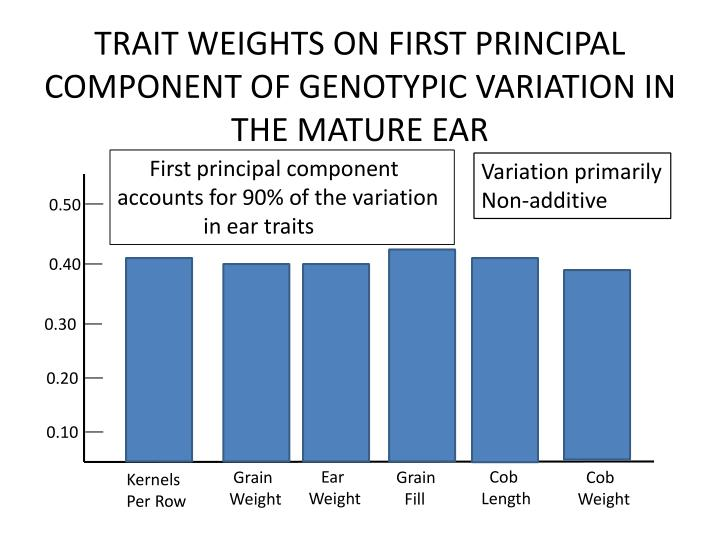 TRAIT WEIGHTS ON FIRST PRINCIPAL COMPONENT OF GENOTYPIC VARIATION IN THE MATURE EAR