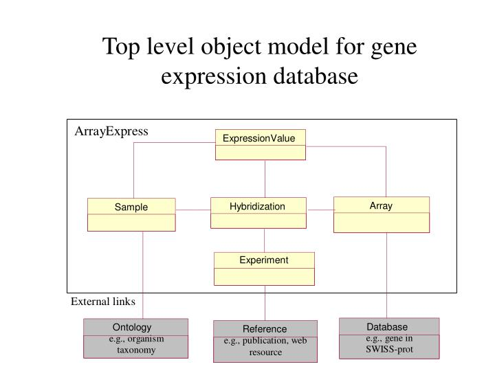 Top level object model for gene expression database