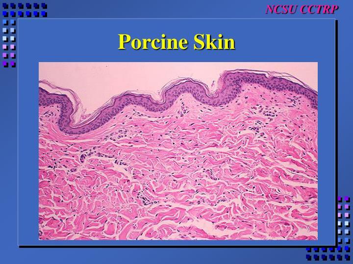 Porcine Skin