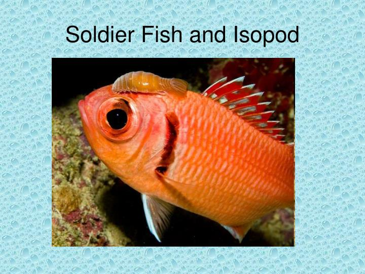 Soldier Fish and Isopod