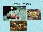 some funguses