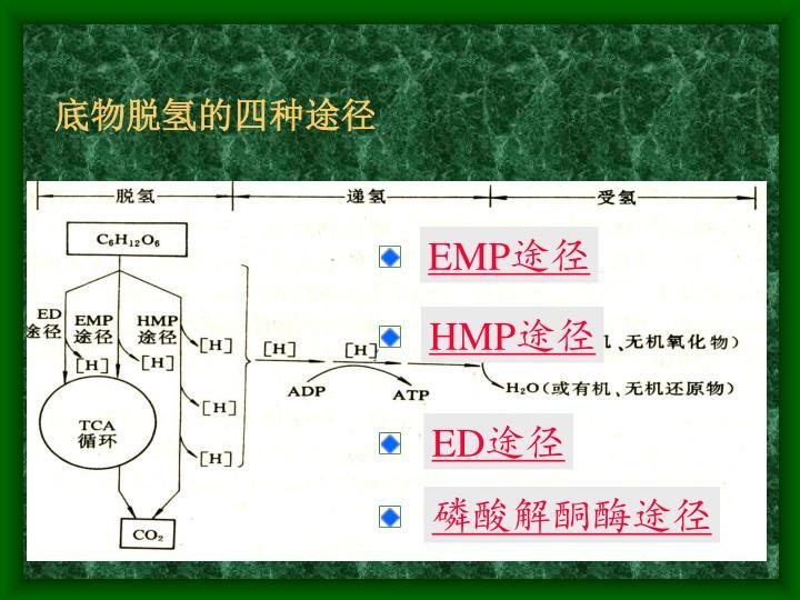 底物脱氢的四种途径