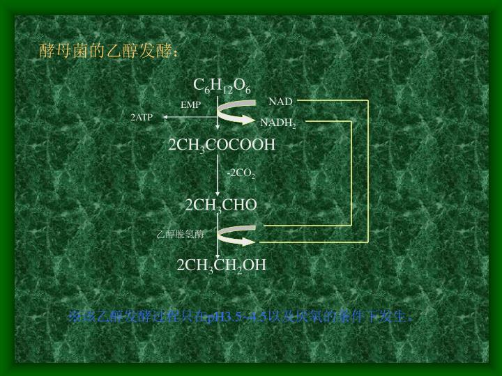 酵母菌的乙醇发酵:
