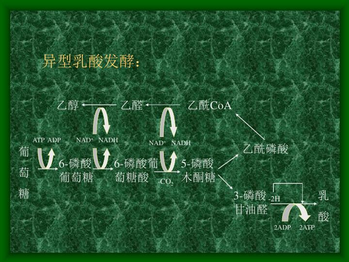 异型乳酸发酵: