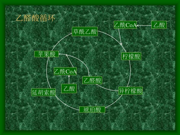 乙醛酸循环