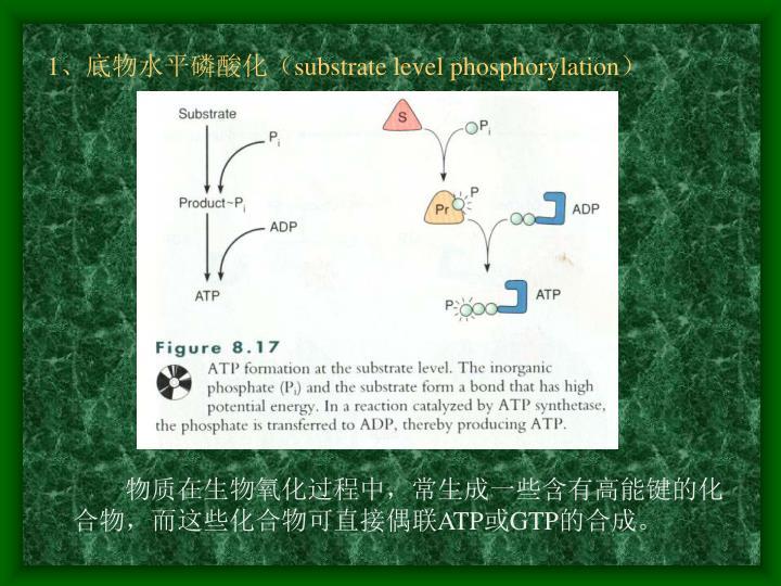 1、底物水平磷酸化(