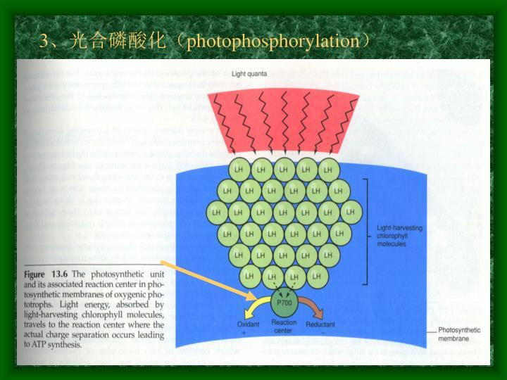 3、光合磷酸化(