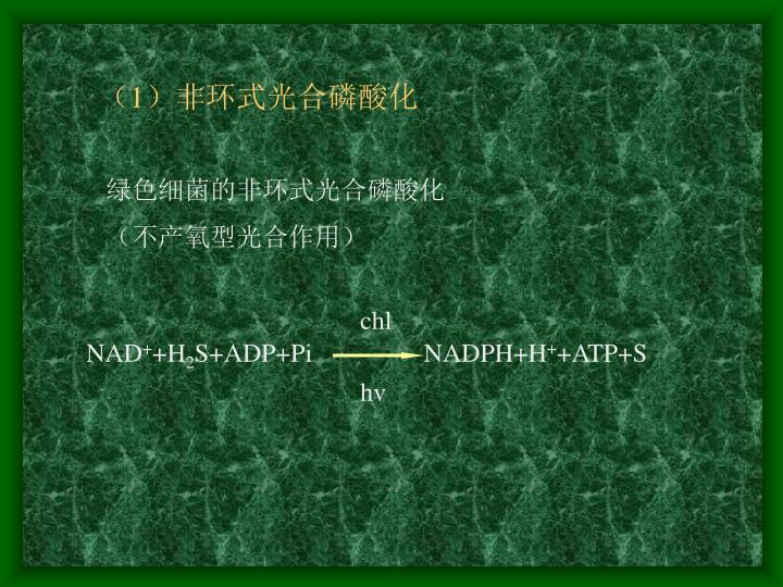 (1)非环式光合磷酸化
