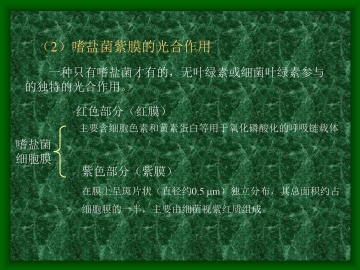(2)嗜盐菌紫膜的光合作用