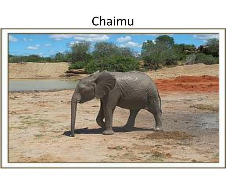 Chaimu