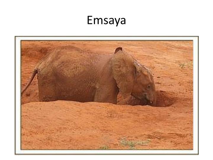 Emsaya