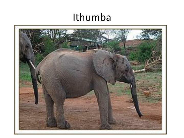 Ithumba