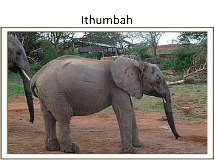 Ithumbah