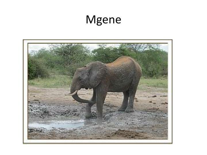 Mgene