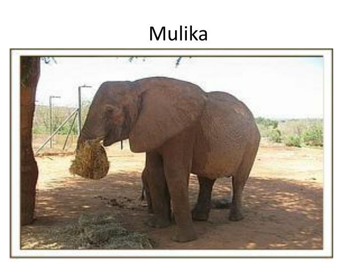 Mulika