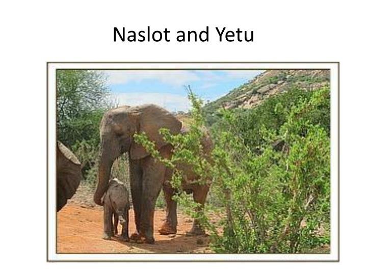 Naslot and Yetu