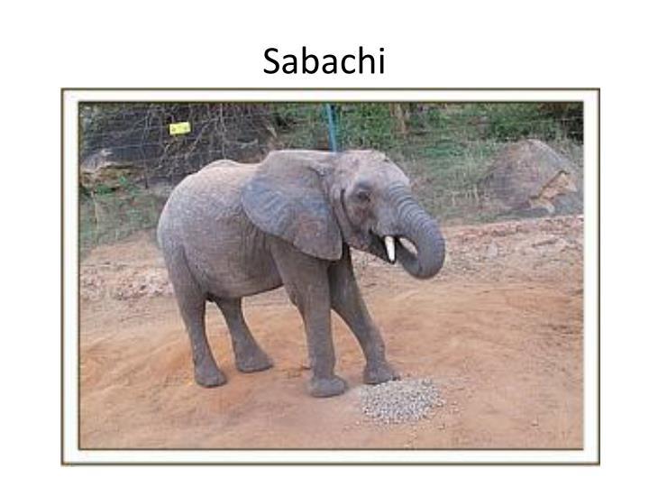 Sabachi