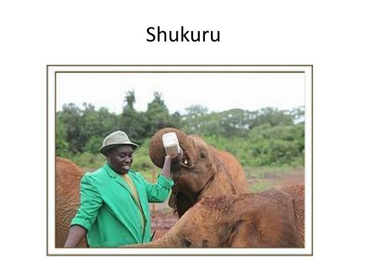 Shukuru
