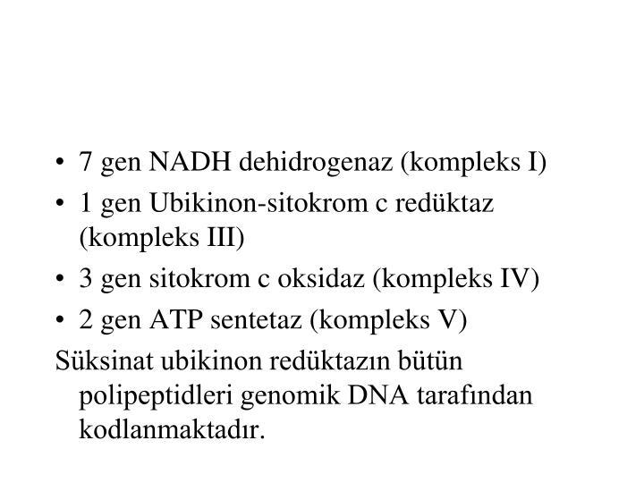 7 gen NADH dehidrogenaz (kompleks I)