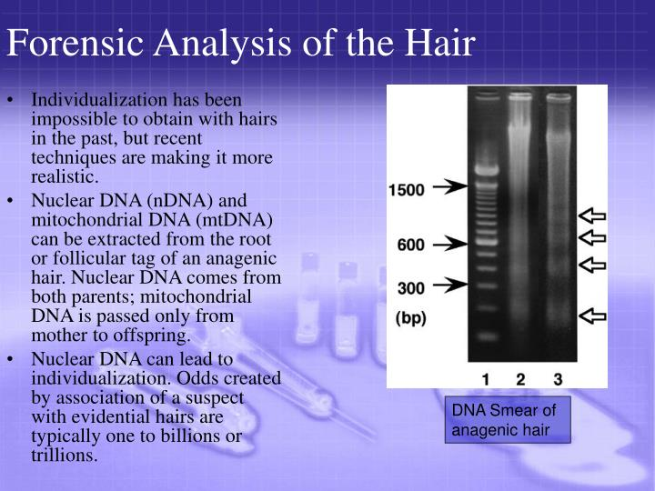 Forensic Analysis of the Hair