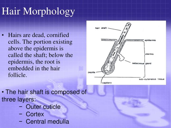 Hair Morphology