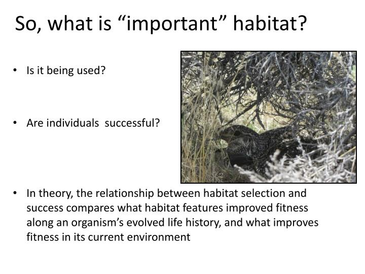 "So, what is ""important"" habitat?"